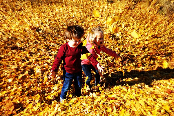 Fall at Fairview
