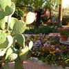 Flower and Cactus Gardens are plentiful at the Arizona Inn.