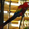 One of the Atrium Lobby Birds.