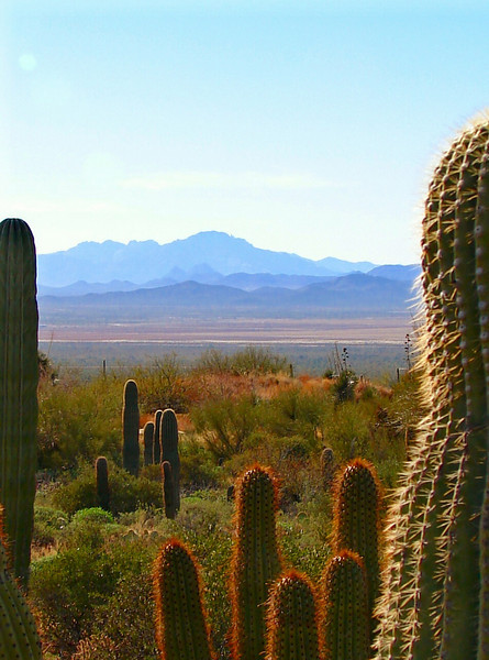 A view facing Southwest: Sonoran Desert Museum