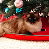 Haley posing under the tree.