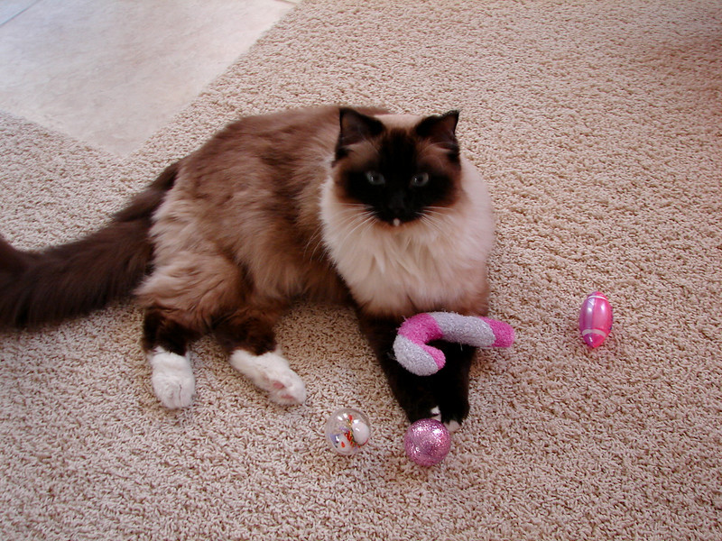 Haley with her stocking stuffers.