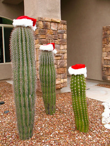 The Three Wise Saguaros.