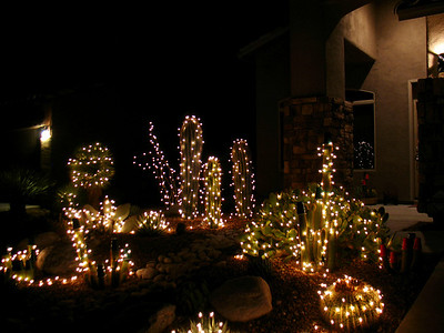 Christmas Lights in the front yard.