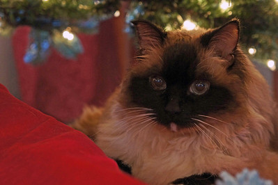 12/25/12: Haley under the Christmas Tree.