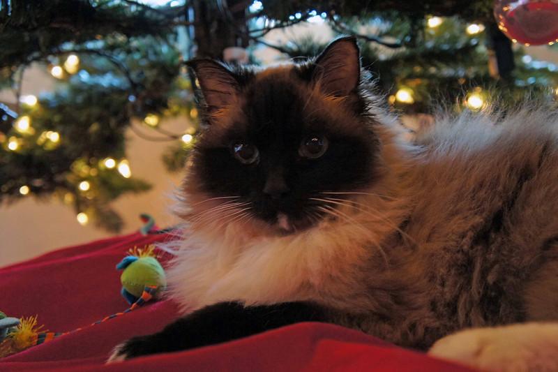 Haley on Christmas Day.