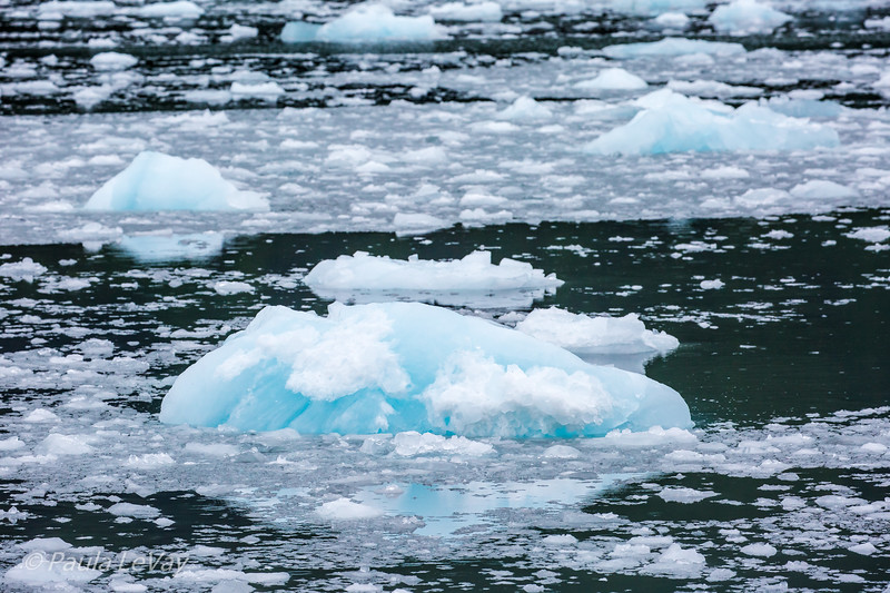 """We were surrounded with much floating ice, sometimes called """"bergey bits"""" from the calving glacier."""