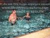 JOHN ANDNICKI AGAIN 6-11-2003