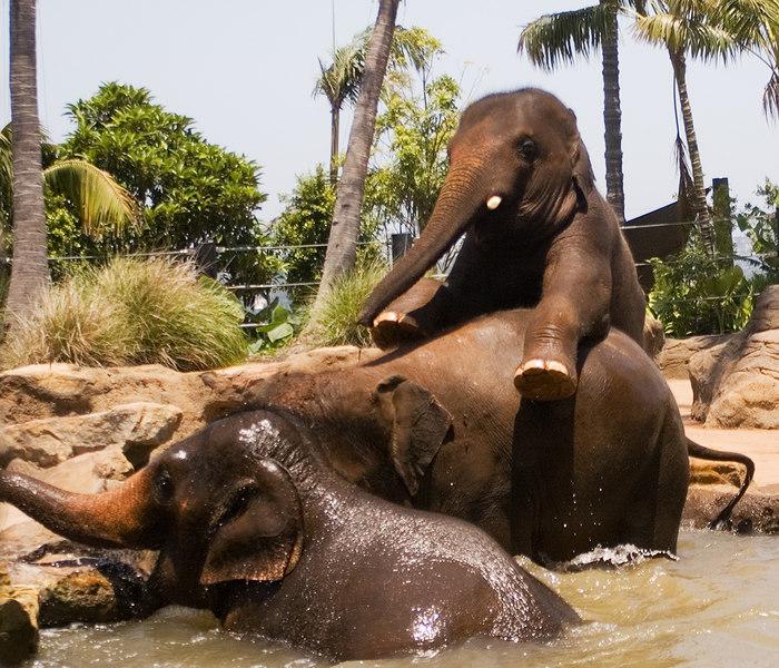 Manda's Zoo Pics (elephants)