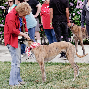 Golden State Greyhound Adoption