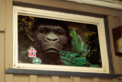 Kevin's Office Window (Long May the Gorilla Live!)