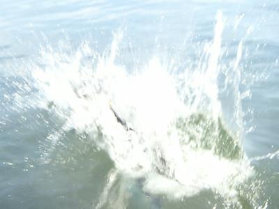 Lake Life 2014