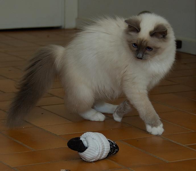 Sock dance