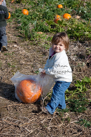 Pumpkin Picking in PA