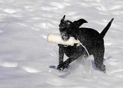 January snow fun