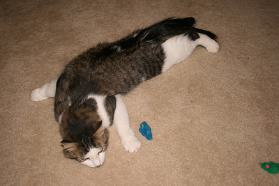 Flat Cat Rocket