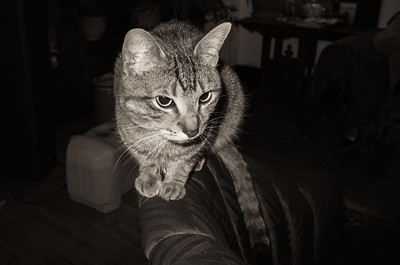 Chilkat #GRll #monotone #cat #flash