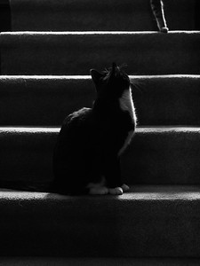 Two cats on the stairs. #cats #monotone #blackandwhite