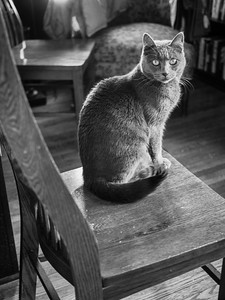 Three chairs and a cat #cat #graycat #chairs #monotone #blackandwhite #EM1