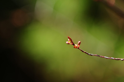 Same twig, different background. Still, nice bokeh ..