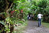 "The walk to the old country house where ""Kusina Salud"" is."