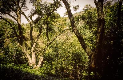 Hunsaker Canyon