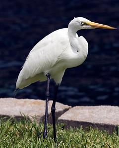 Wildlife at Lake Eola, Orlando, Florida