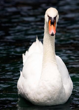 Wildlife at Lake Eola