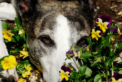 Sleeping in the Flowerbed