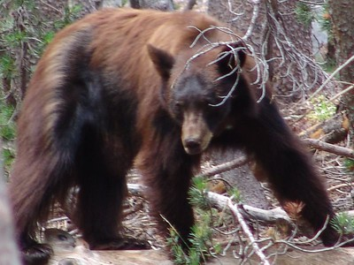 Yosemite Walk 8-05