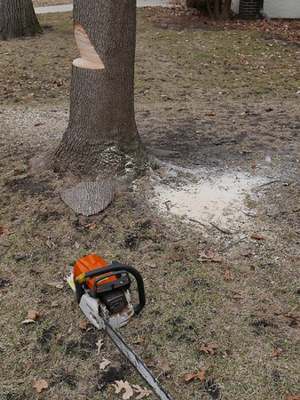 Tree Removal March 2015