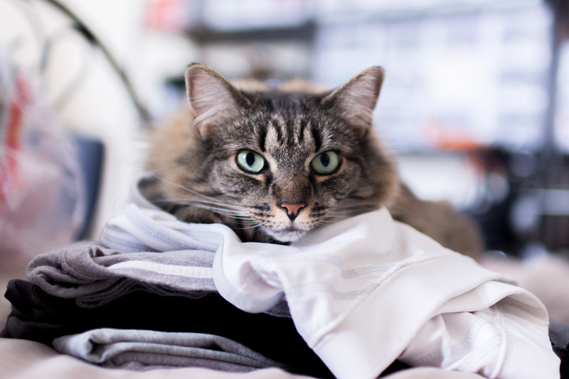Lilith is going to the dentist tomorrow.  In honor of the sacrifice Lilith is making in furtherance of a beautiful smile here is a photo of Lilith guarding our laundry.