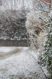 Snow-9696