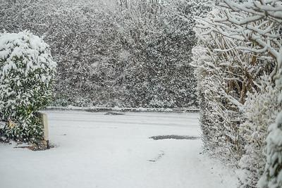 Snow-9699