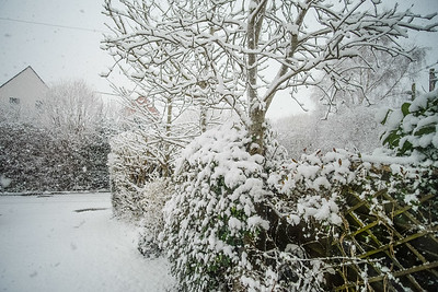 Snow-9702