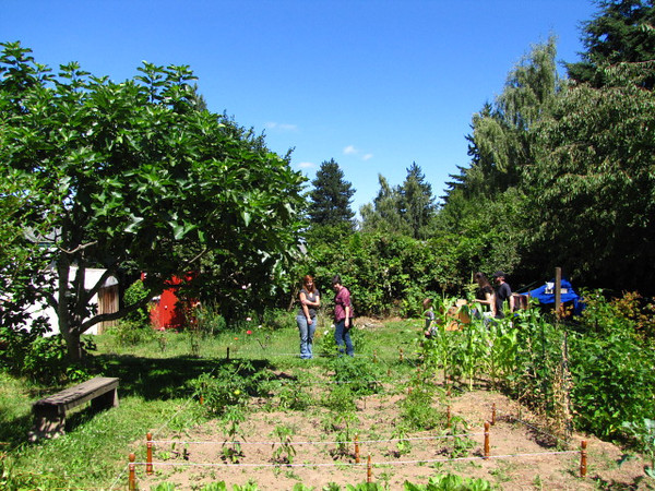 The property was already planted with apple, nectarine, apricot, and fig trees - 2 varieties of grapes - and plenty of square footage for a huge vegetable garden.