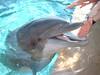 Dolphin close