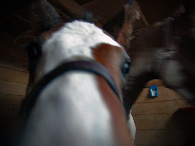 Spring 2006, Ranch Martine.