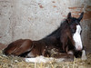 Daniele new colt march 18 032 Genuine