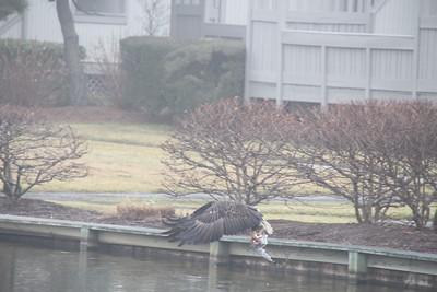 011313 Eagle shots