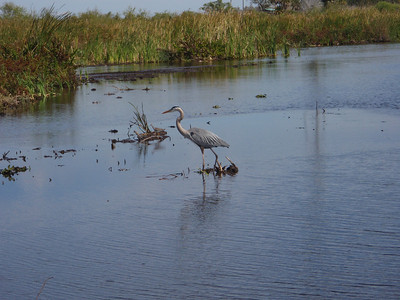2010 02 20 Everglades 021