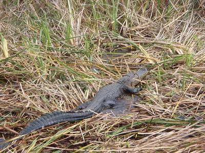2010 02 20 Everglades 042