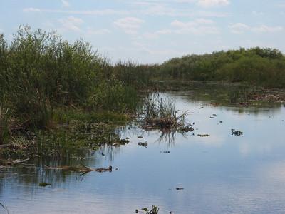 2010 02 20 Everglades 033