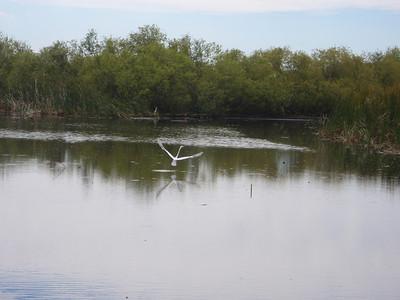 2010 02 20 Everglades 031