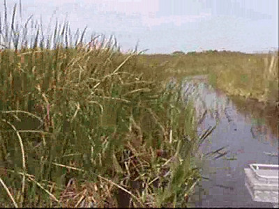 2010 Everglades Airboating