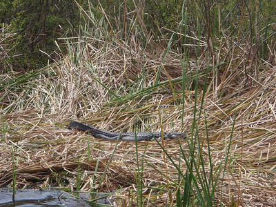 2010 02 20 Everglades 034
