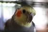 063 Bird