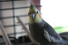 055 Bird