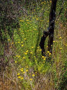 050718_4224_CA Malibu Solstice Canyon