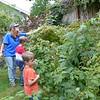 Eating raspberries in Joan's backyard.